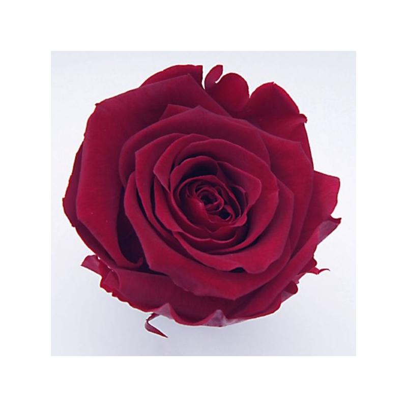 Tête de Rose stabilisée D6 Bordeaux - boîte de 6