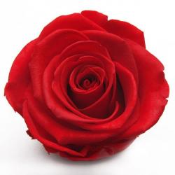 Tête de Rose stabilisée D6 Rouge - boîte de 6