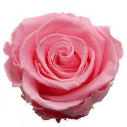 Tête de Rose stabilisée D6 Rose - boîte de 6