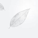 SYMPHONIE - Blanc 60 x 120m Cello fantaisie 40µ