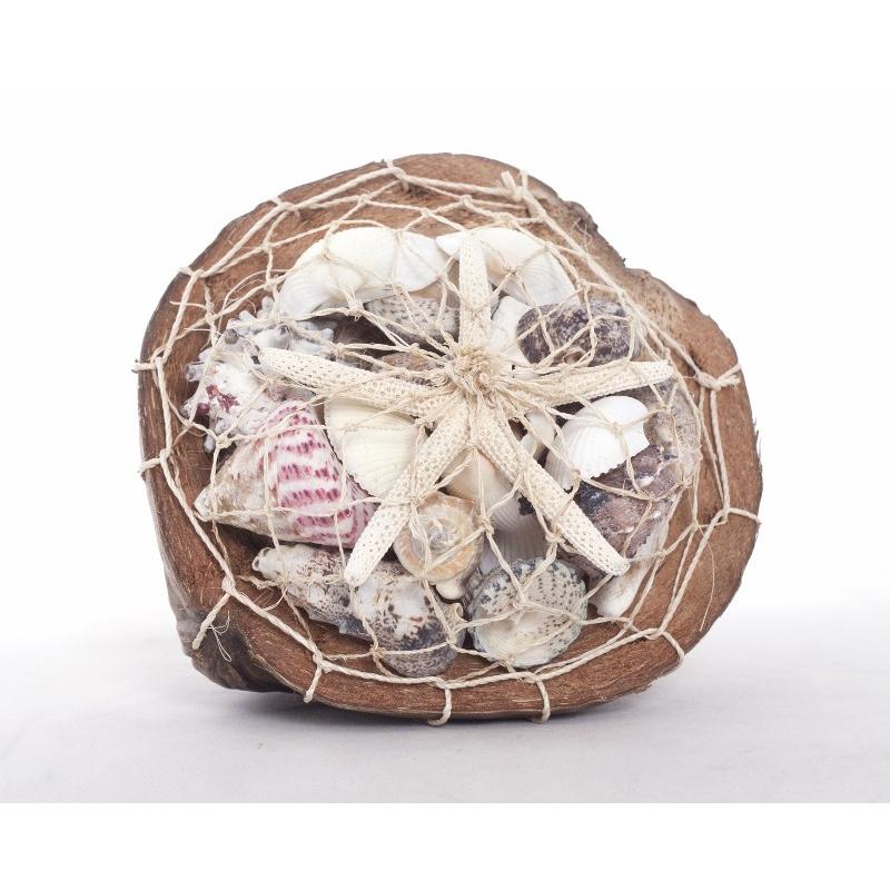 Coquillages Dans Noix De Coco