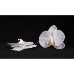 Fleuron de Phalaenopsis Blanc par 6