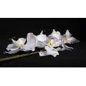 Orchidée Branche 7 fleurons Blanc h78 cm