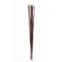 Wild Canna 100 cm Marron