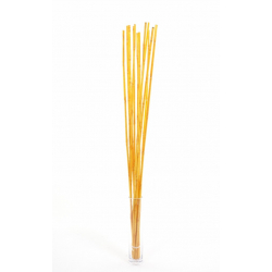 WILD CANNA - Bambou 100 cm Abricot