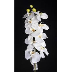 Phalaenopsis Blanc 1m