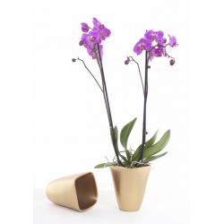 Cache-pot Orchidée Carré d14 h17 cm Or par 6