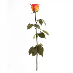 TALLO - Rose Stabilisée sur tige Orange D6 cm
