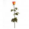 Rose Stabilisée sur tige Orange D5 x H55 cm