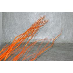 Salix Orange 1.50 m