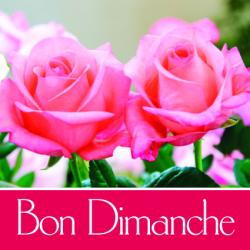 BON DIMANCHE - Etiquettes Voeux Tendresse Par 500