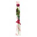 Etui Rose Coeur Rouge 16x100cm par 100