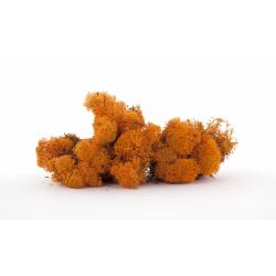 Mousse Islande Orange par 500grm