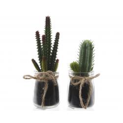 SIERRA - Cactus et Pot Verre assortis H13 /17 cm