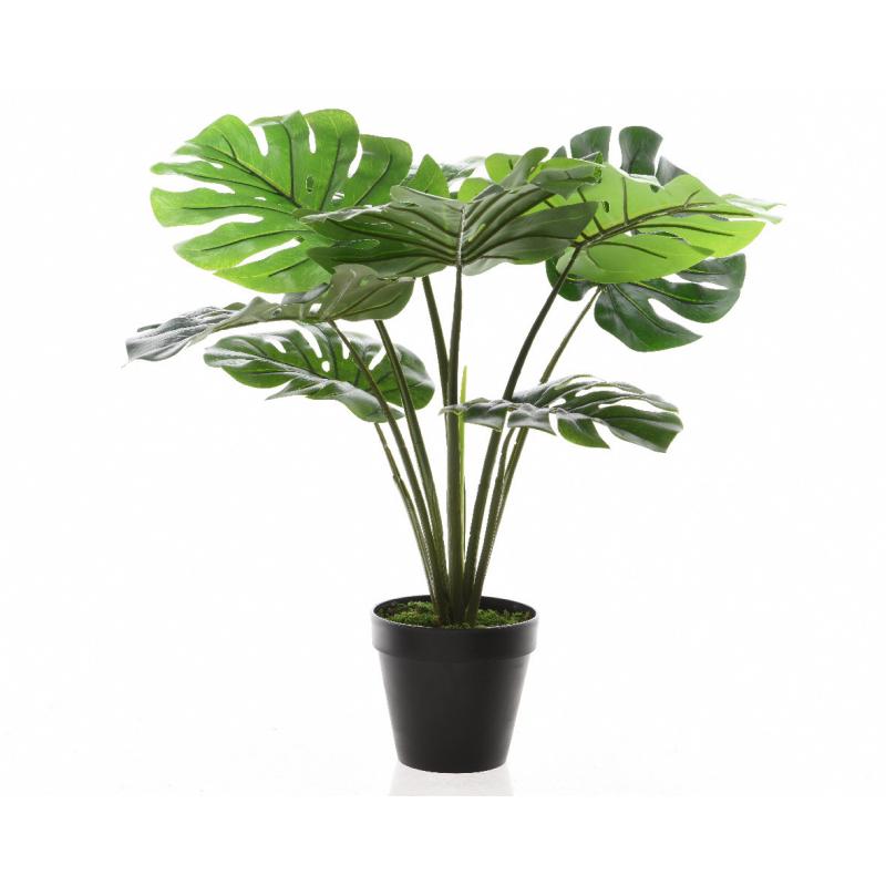 TROPIC - Monstera en Pot 8 feuilles  D16 x H60 cm