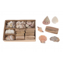 MAREE - Coquillages en Assortiment L20 x P15 x H6 cm