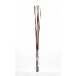 WILD CANNA - Bambou 100 cm Gris