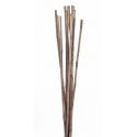 Wild Canna 100 cm Gris