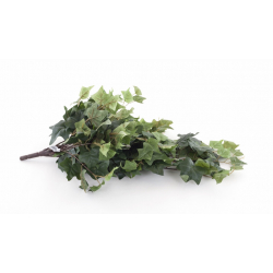Lierre Vert 50cm