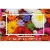 DIV - Carte Jeso Diamond I par 10 Une Petite Fleur Fait Toujours  Chaud
