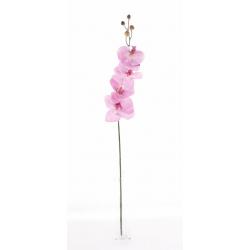 MILAN - Phalaenopsis 6 fleurons H78 cm Rose