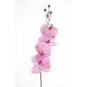"""Phalaenopsis""""Milan""""Rose 78cm"""