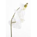 "Phalaenopsis""Vichy""Créme 58cm"