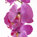 Phalaenopsis 9 fleurons 104 cm Fuchsia