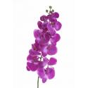 Phalaenopsis Violet 103cm