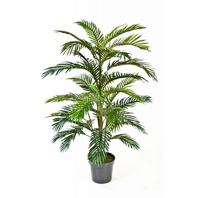 Areca Palm 120cm