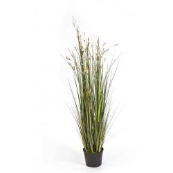 Coral Grass/Cream Flowers 1m20