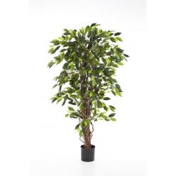Ficus Liana Vert1m80