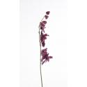 Pastoral Symphony Orchid Bordeaux