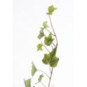Branche de Lierre Vert 78 feuilles