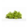 Mousse Islande Vert Printemps par 500g