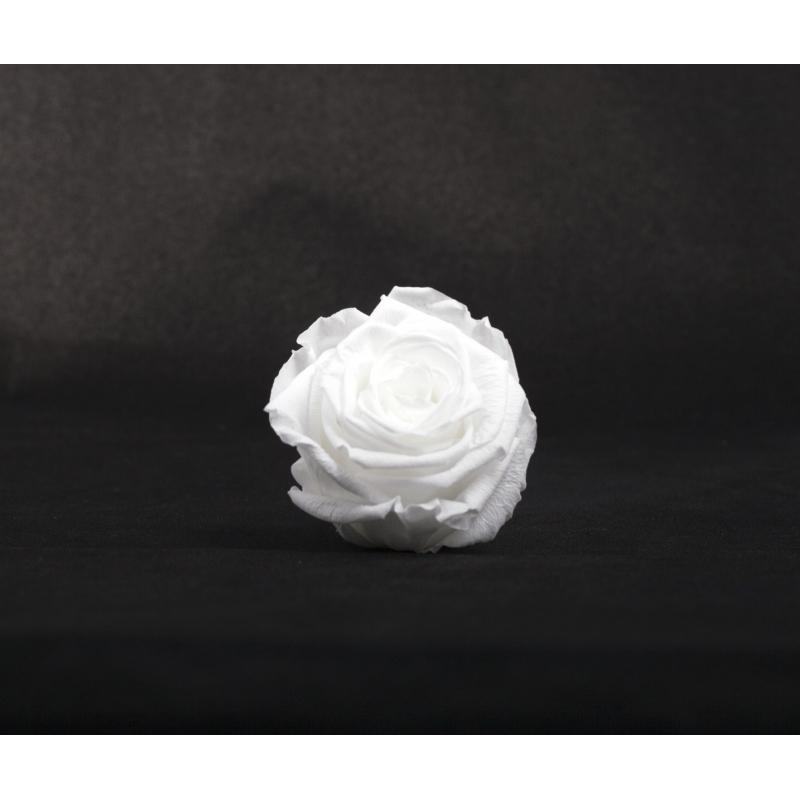 ROSA - Tête Rose Stabilisée d5cm Blanc