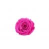 ROSA - Tête Rose Stabilisée d5cm Fuchsia