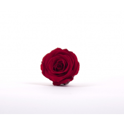 Tête Rose Stabilisée d5cm Rouge