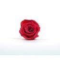 ROSA - Tête Rose Stabilisée Rose Vif D5cm