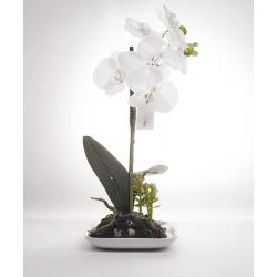 ORCHI - Orchidée H30cm et pot en céramique blanc