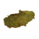 Mousse Naturelle Verte Séchée par 2 kg