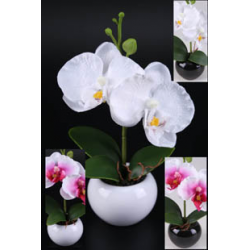 ORCHI - Orchidée H17 cm Crème/Fuchsia/Blanc + Pot en céramique blanc