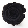 ROSA - Tête Rose Stabilisée D5 cm Noire
