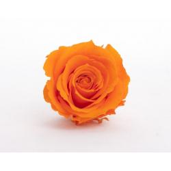Tête Rose Stabilisée D5 cm Orange
