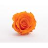ROSA - Tête Rose Stabilisée D5 cm Orange