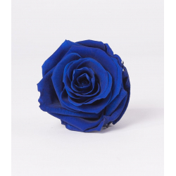 Tête Rose Stabilisée D5 cm Bleue