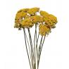 Bouquet de fleurs séchées d'Achillea Jaune