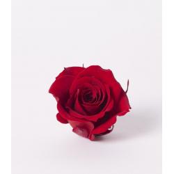 ROSA - Tête Rose Stabilisée D4cm Rouge par 12