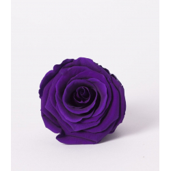 ROSA - Tête Rose Stabilisée D5cm Violet