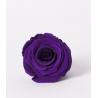 ROSA - Tête Rose Stabilisée D5cm Violette